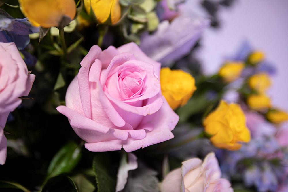 rosa de invernadero