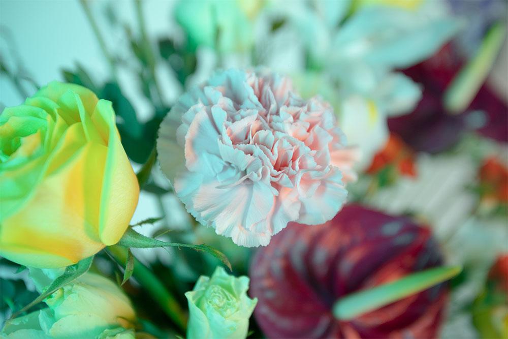 rosa amarilla y clavel