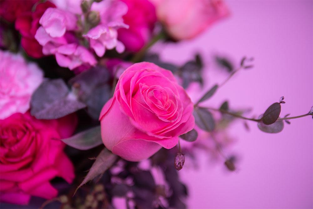 rosas y eucalipto