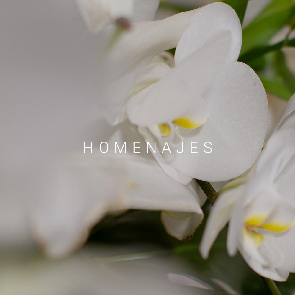 homenajes-delphinium-belladonna