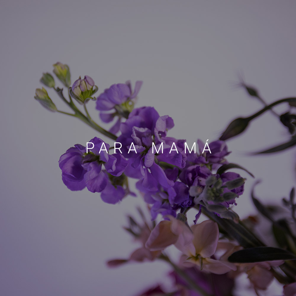 para-mama-statice