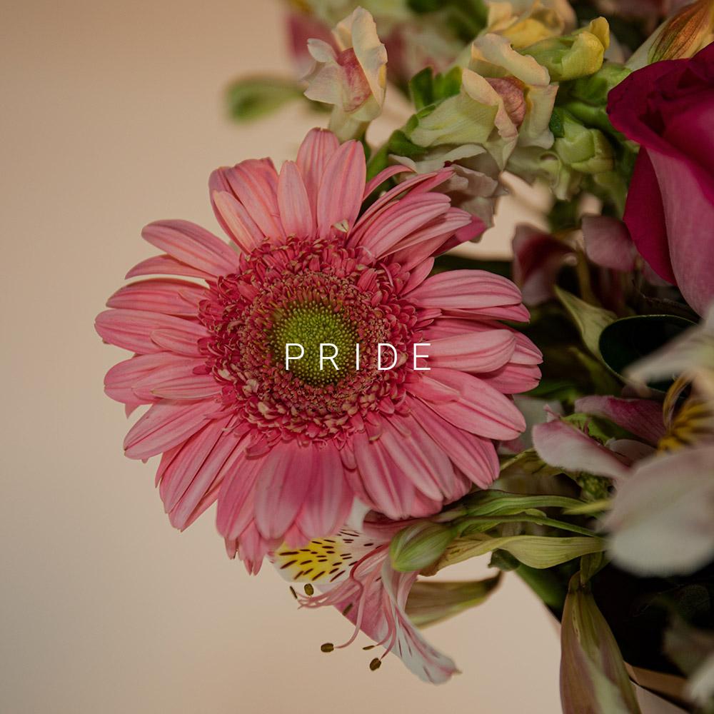pride-gerbera